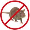 Απώθηση ποντικιών, αρουραίων