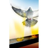 Gel - απωθητικό πτηνών Bird free optical gel - 1 κουτάκι